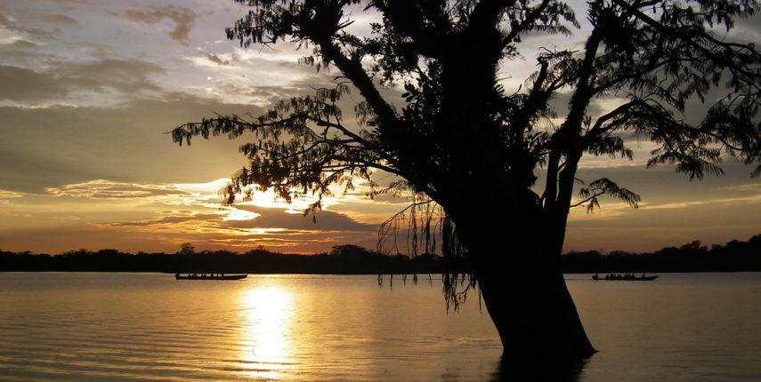 Jungle: Cuyabeno Reserve (Add-on) 6
