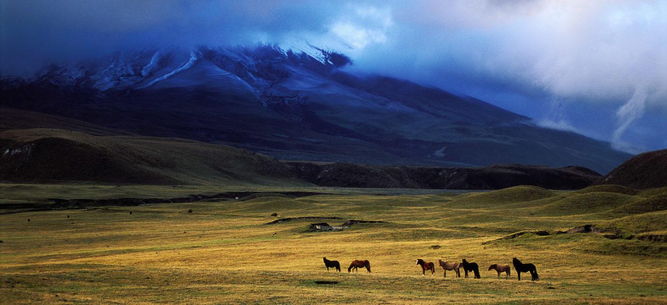 The Andean Condor's Trek 1