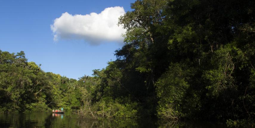 Jungle: Puerto Maldonado