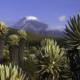 Tolima Climbs 5221 m