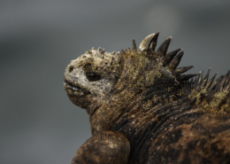 Galapagos Island Hopping: Santa Cruz & Isabela