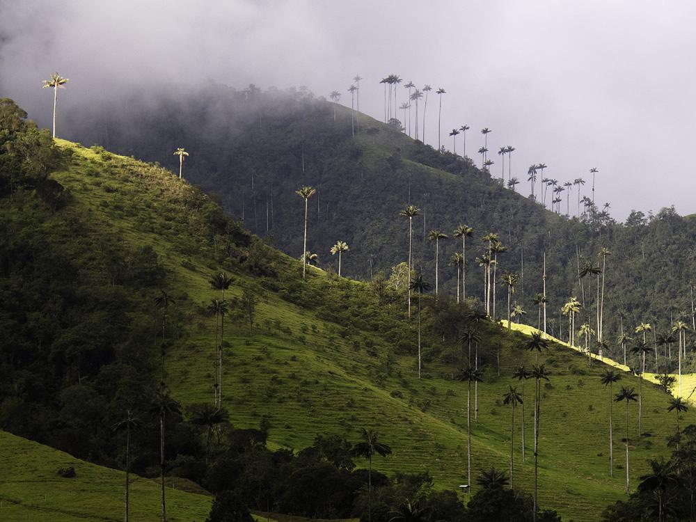 My trip to Tolima 2